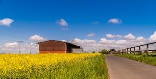 Зацветая поле рапсов под голубым небом r стоковое изображение rf