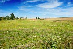Зацветая поле Стоковое фото RF