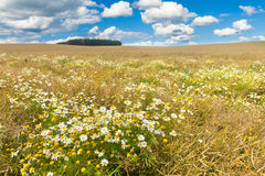 Зацветая поле Стоковая Фотография RF