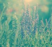 Зацветая полевые цветки во время восхода солнца. стоковое изображение rf