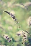 Зацветая полевые цветки стоковое фото