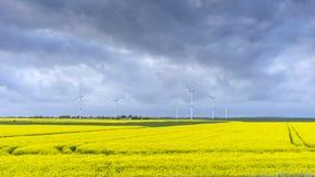 Зацветая поле рэпов в Шлезвиг-Гольштейне, Германии Стоковые Изображения