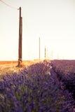 Зацветая поля лаванды на заходе солнца Стоковое Изображение