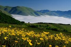 Зацветая поля Castelluccio di Norcia стоковые фото