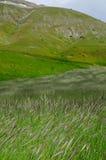Зацветая поля Castelluccio di Norcia стоковая фотография rf