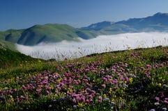 Зацветая поля Castelluccio di Norcia стоковое изображение rf