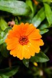 Зацветая предпосылка цветка стоковое изображение rf