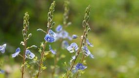 зацветая природа Стоковое Фото