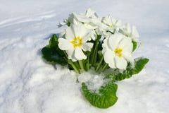зацветая приходя весна цветков вверх Стоковое Изображение