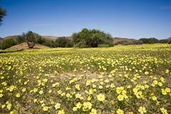 Зацветая пустыня в Damaraland, Намибии стоковая фотография