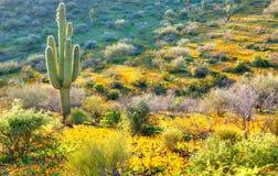 Зацветая пустыня стоковые фотографии rf