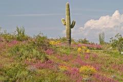зацветая пустыня стоковые изображения