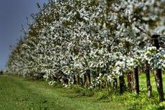 зацветая сад Стоковая Фотография RF