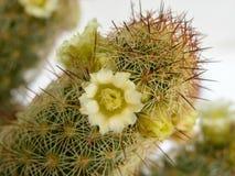 Зацветая свежий покрашенный цветок Стоковая Фотография RF