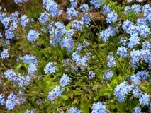 Зацветая свежий покрашенный цветок Стоковое Изображение