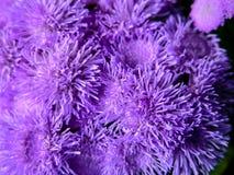 Зацветая свежий покрашенный цветок Стоковое Фото