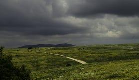 Зацветая сельская местность полей Стоковая Фотография RF