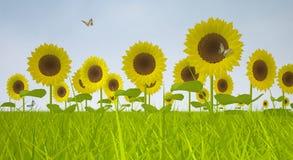 зацветая солнцецветы Стоковое Изображение
