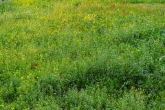 Зацветая трава Стоковое Изображение