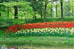 Зацветая тюльпаны в парке Стоковые Фотографии RF