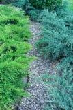 Зацветая утесы, пути булыжника сада Стоковая Фотография