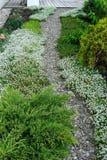 Зацветая утесы, пути булыжника сада Стоковые Фотографии RF