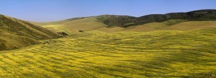 зацветая холмы Стоковое фото RF