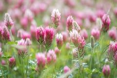 Зацветая цветки весной - может 2016 Стоковое Изображение RF