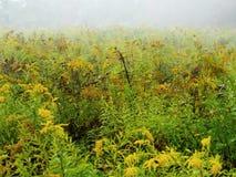 Зацветая цветки в дне осени Стоковые Изображения