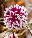 Зацветая цветки изолировали уникальное естественное фото стоковые фото