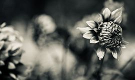 Зацветая цветки изолировали уникальное естественное фото стоковое фото