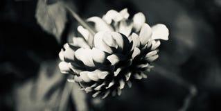 Зацветая цветки изолировали уникальное естественное фото стоковые изображения rf