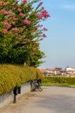 Зацветая цветки мирта и деревянной скамьи Crape Стоковые Фотографии RF