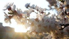 Зацветая цветки скачут парк видеоматериал