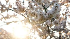 Зацветая цветки скачут парк сток-видео