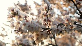 Зацветая цветки скачут парк акции видеоматериалы