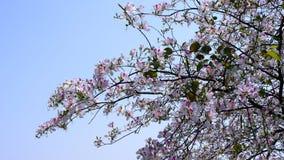 зацветая цветки Стоковые Фото