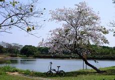 зацветая цветки Стоковая Фотография RF