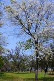 зацветая цветки Стоковое Изображение