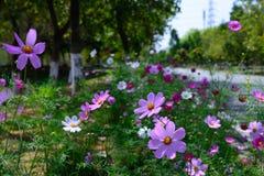зацветая цветки Стоковые Изображения RF