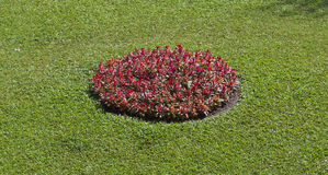 зацветая цветки Стоковые Фотографии RF