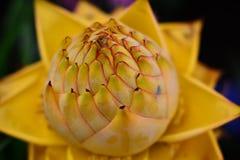зацветая цветки Стоковое фото RF
