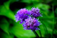 Зацветая цветок в лесе Стоковая Фотография