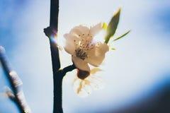 Зацветая цветок в крупном плане луча солнца Стоковые Изображения RF