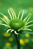 зацветая цветок Стоковые Изображения RF