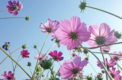 Зацветая цветок стоковые изображения