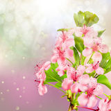 Зацветая яблоня против неба 10 eps Стоковые Фото