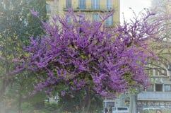 зацветая magnolia Стоковые Фото
