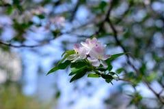 зацветая wildflowers Стоковое Изображение