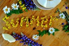 Зацветенное лето Из цветков поля Стоковые Изображения RF